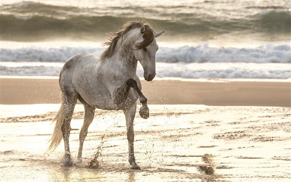 Wallpaper Horse walk in the beach, water splash, sea