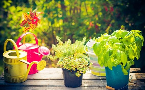 Wallpaper Houseplant, sprinkle water bottle, summer