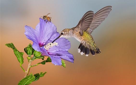 Wallpaper Hummingbird flight, purple flower, bee