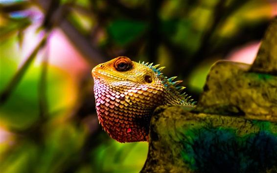 Papéis de Parede Iguana, cabeça, escamas, brilho, réptil