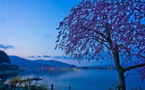 Wallpaper Japan, Lake Kawaguchi, sakura, tree flowers, morning