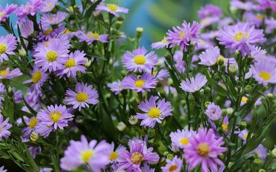 배경 화면 연한 자주색 꽃