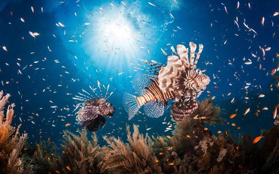 Wallpaper Lionfish, underwater, sun