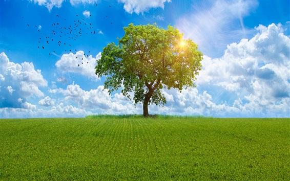 Papéis de Parede Árvore solitária, campos, pássaros, sol, verão