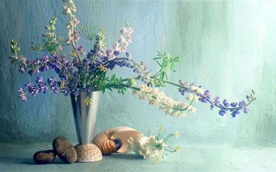 배경 화면 루팡 꽃, 화병, 조개, 눈부심