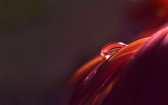 Wallpaper Macro photography, petal, water drop