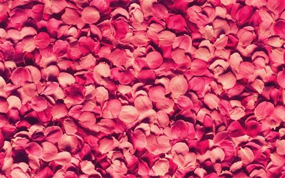 Wallpaper Many pink rose petals background