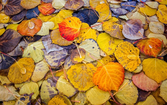 Wallpaper Many yellow leaves, autumn