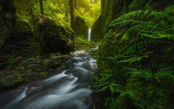 Обои Мосси Гротто Фоллс, водопад, деревья, папоротник, зеленый, Орегон, США