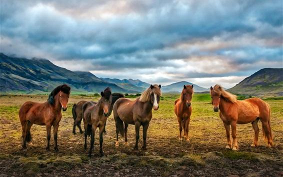 壁紙 山、雲、5頭馬