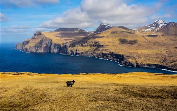 Wallpaper Mountains, sea, clouds, black sheep, islands