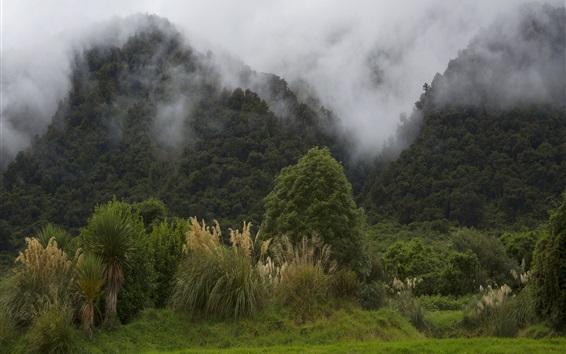 Wallpaper New Zealand, mountains, fog, morning, nature landscape