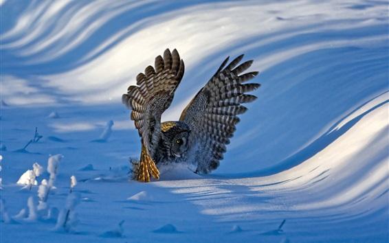 Wallpaper Owl, wings, snow