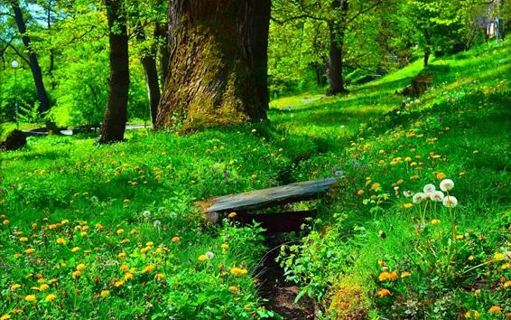 Wallpaper Park, grass, flowers, trees, green, spring