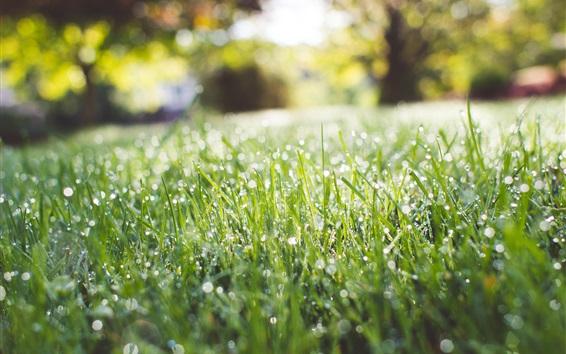 Wallpaper Park, grass, water drops, summer
