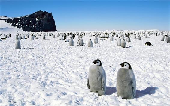 Papéis de Parede Penguim, antartica, neve