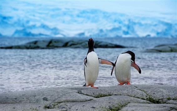 Wallpaper Penguins, couple, antarctica