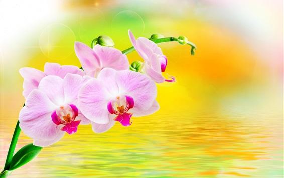 Papéis de Parede Phalaenopsis, flores, água