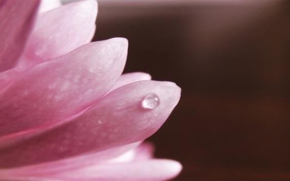 Papéis de Parede Pétalas cor de rosa close-up, gota de água, fundo preto