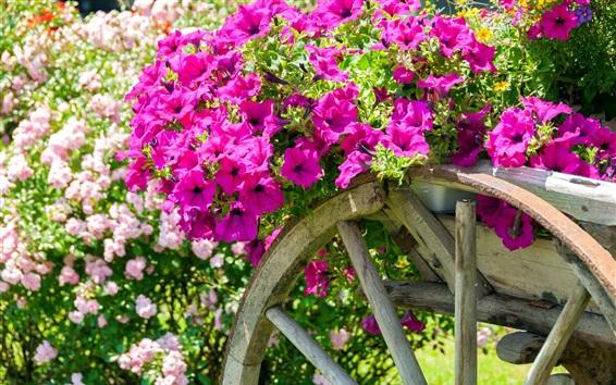 Papéis de Parede Petunias rosa, carrinho, jardim