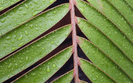 Papéis de Parede Plantas, folhas, gotas de água
