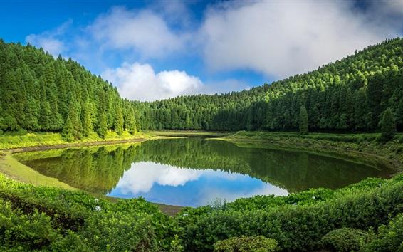 Papéis de Parede Portugal, Ilha de São Miguel, árvores, lago, reflexão da água