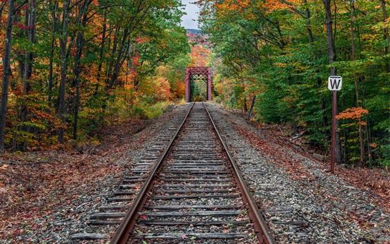 Fond d'écran Chemin de fer dans la forêt, automne