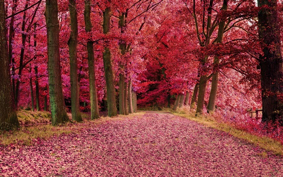 Wallpaper Red leaves forest, trees, autumn, path