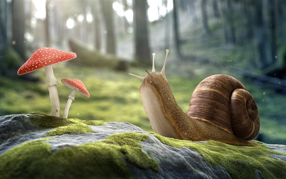 Wallpaper Snail and mushrooms, amanita