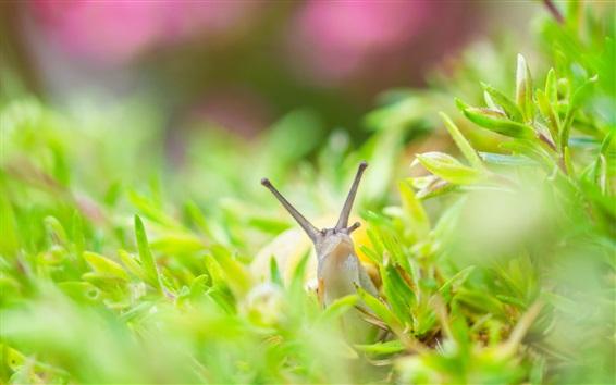 Papéis de Parede Caracol, grama, inseto