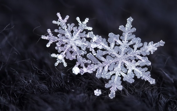Wallpaper Snowflakes, ice crystals, winter