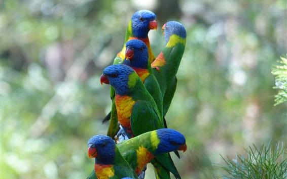 배경 화면 일부 여러 가지 빛깔의 앵무새