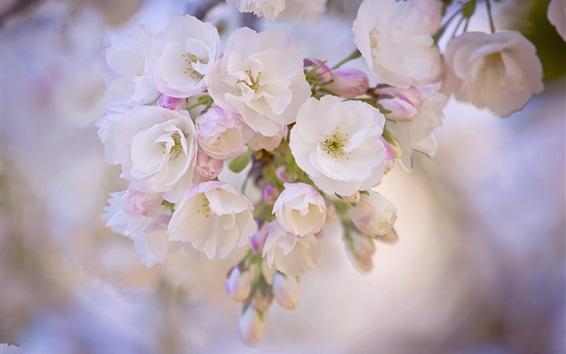 Papéis de Parede Primavera, flores florescem, galhos, fundo desfocado