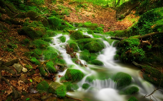 Papéis de Parede Córrego, musgo, floresta