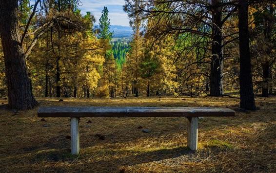 Wallpaper Trees, bench, autumn