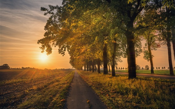 Wallpaper Trees, road, field, sunrise, morning
