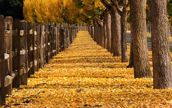 Wallpaper Trees, yellow leaves, path, fence, park, autumn