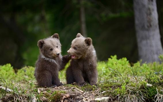 壁紙 2匹の熊は遊び心があります