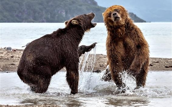 Papéis de Parede Dois ursos jogam na água
