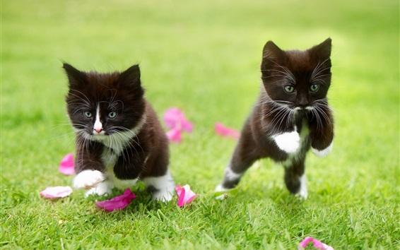 Papéis de Parede Dois gatinhos pretos correndo na grama