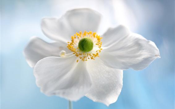 Wallpaper White petals flower, bokeh