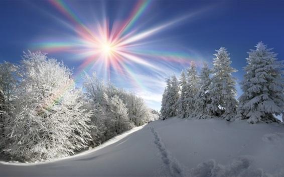 Papéis de Parede Inverno, neve grossa, árvores, raios solares, cores do arco-íris