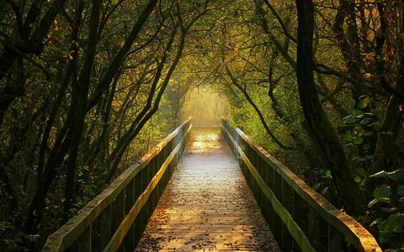 Papéis de Parede Ponte de madeira, caminho, árvores, outono, Alemanha