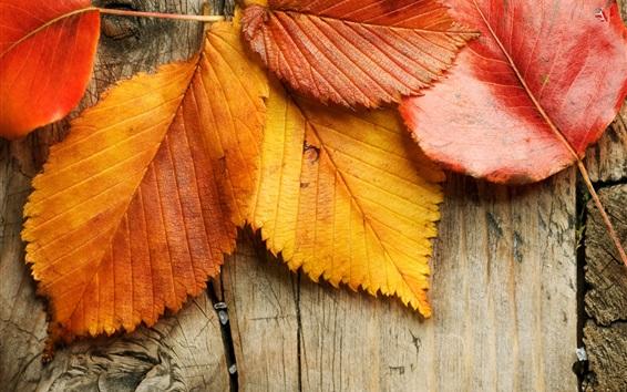 Обои Желтые и красные листья, фон из дерева, осень