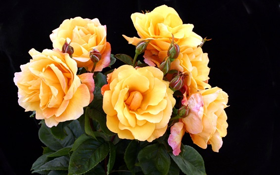 Wallpaper Yellow roses, black background
