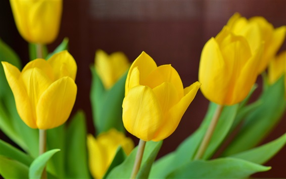 Wallpaper Yellow tulip flowers close-up, blurry background