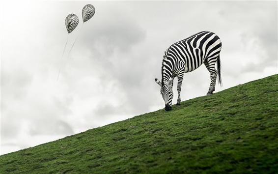 Wallpaper Zebra eat grass, slope, balloon