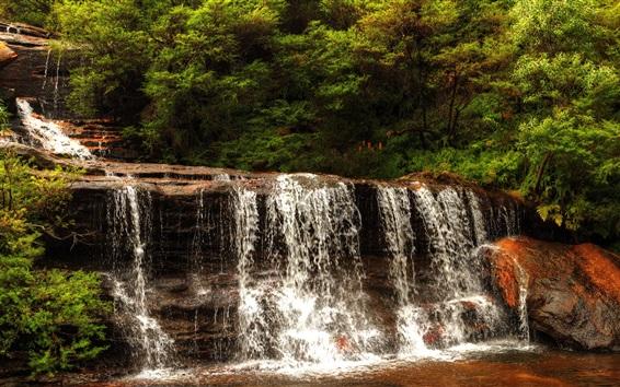 Fond d'écran Australie, Wentworth Falls, cascade, arbres