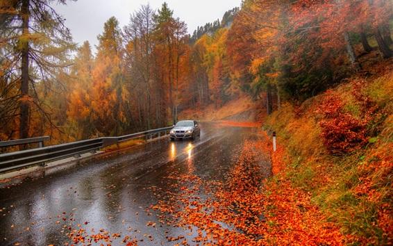 Wallpaper Autumn, trees, road, car, Alps, Italy
