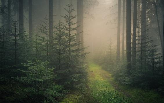 Wallpaper Baden-Wurttemberg, Black Forest, fog, Germany